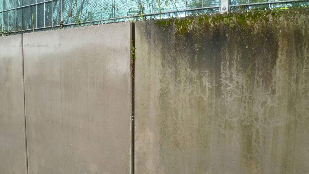 Algen und Moos an Mauer